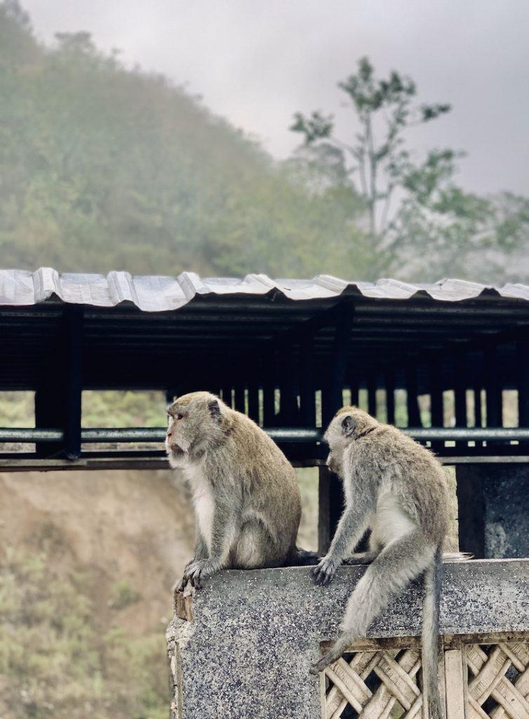 Monyet di Lombok Timur, Wisata ke Lombok
