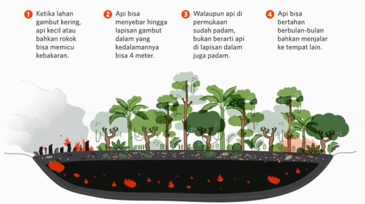 Kebakaran Hutan Gambut